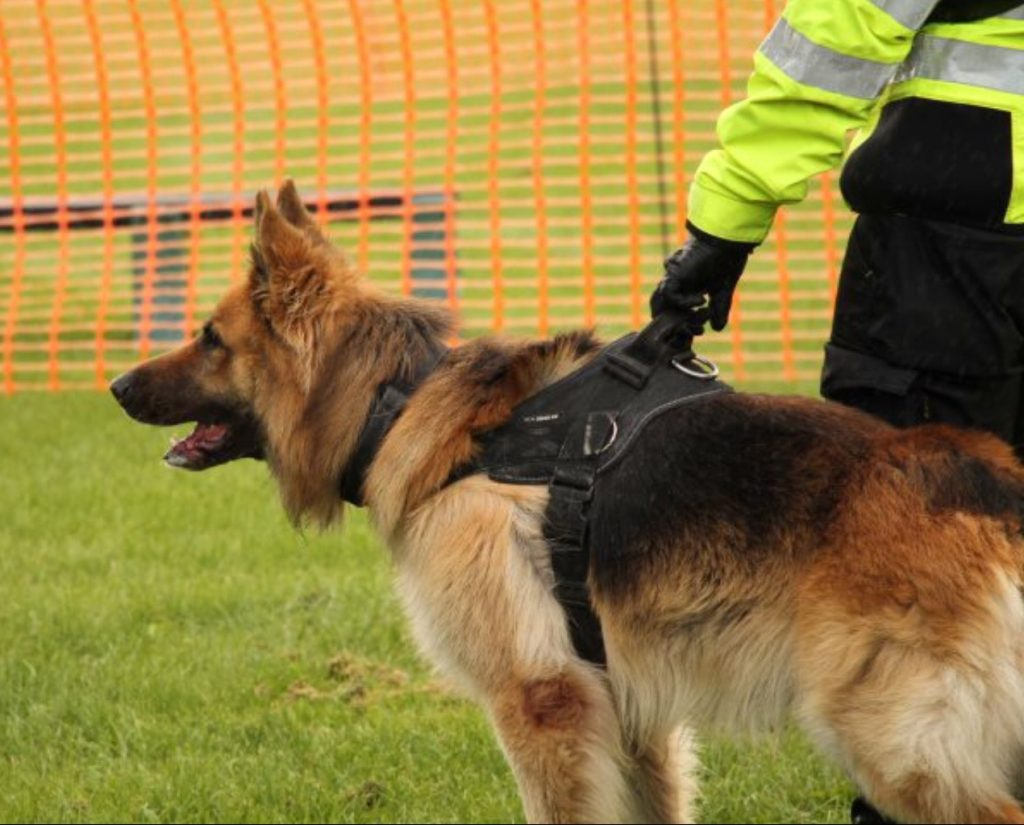 Importance of K9 units for securing your business